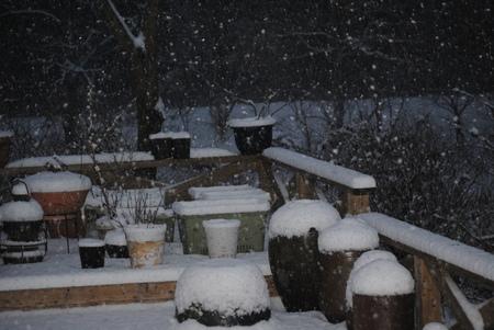 2019初めての積雪.jpg