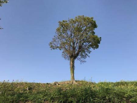 一本の木.jpeg