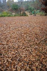 落ち葉の野乃花3.jpg