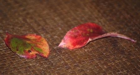 ブルーベリーの紅葉2.jpeg