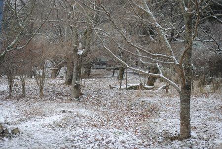 2010、2、9雪化粧.jpeg