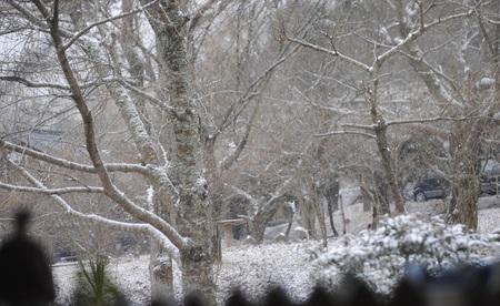 2・17久々の雪景色2jpeg