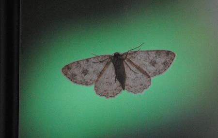 羽を休める蝶.jpeg
