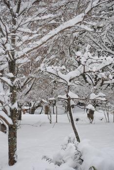 2019雪・2.jpg