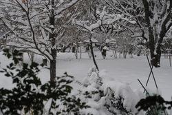 2019雪・9.jpg