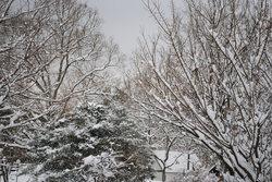 2019雪12.jpg