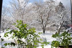 2019雪8.jpg