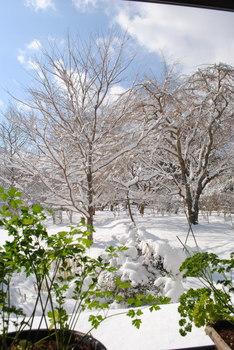 2019雪1.jpg