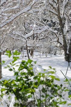 2019雪・3.jpg